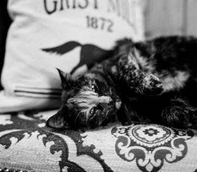 IH---barn-cat
