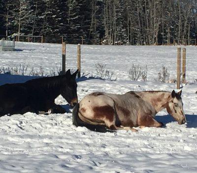 IH - horses in winter