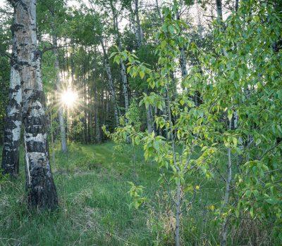 IH---trails-2