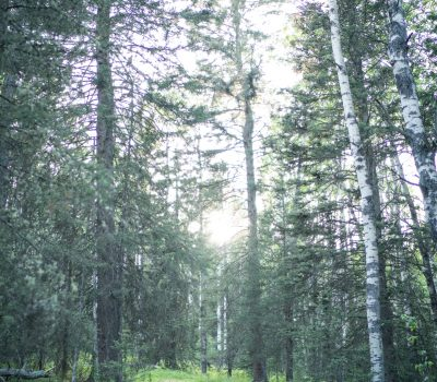 IH---trails