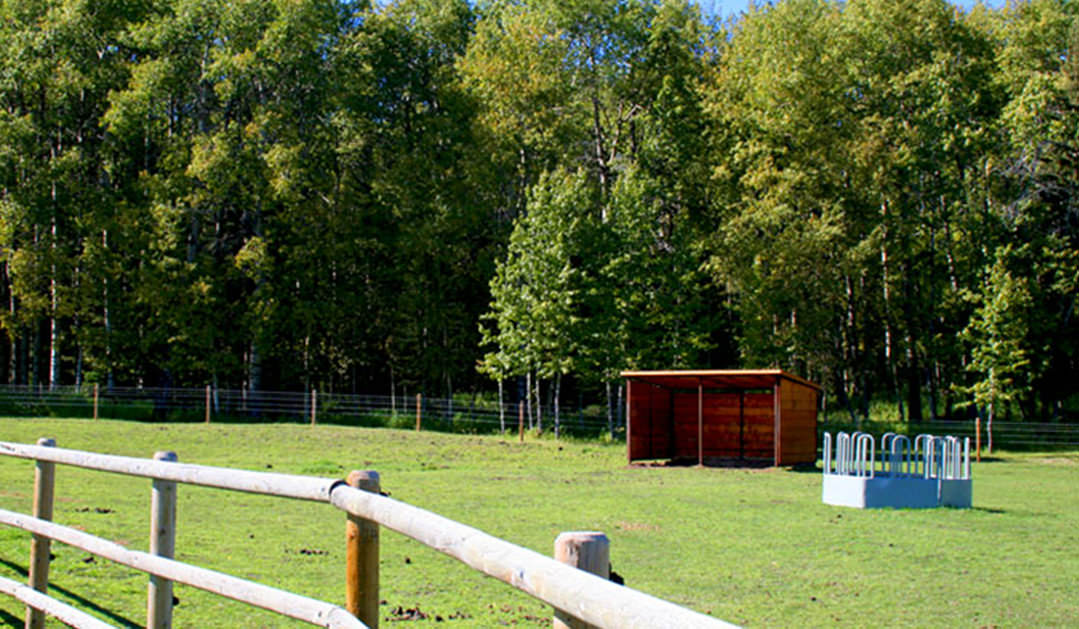 pasture-with-shelter